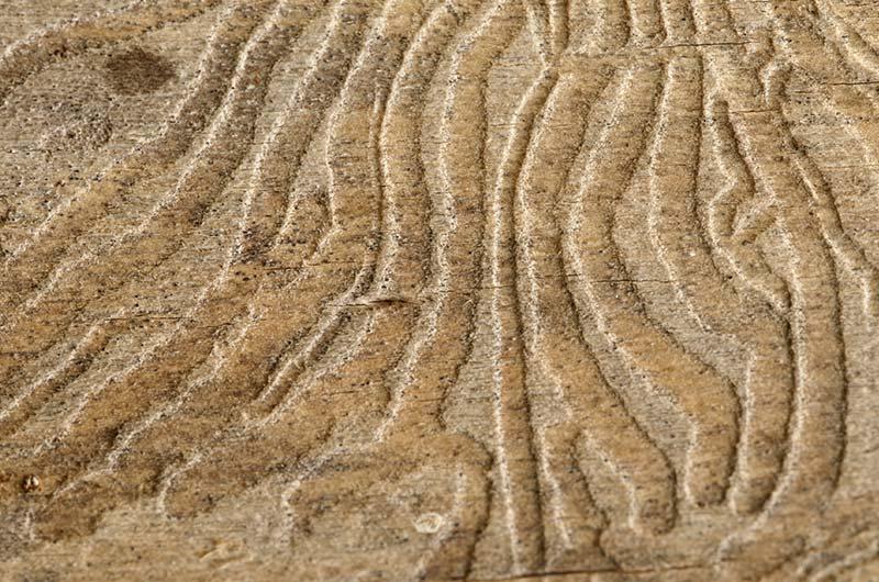 S-shaped patterns